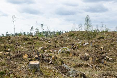 Photo pour Stumps at a clear cut forest area - image libre de droit