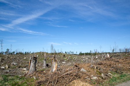 Photo for Stumps at a clear cut forest area in Sweden - Royalty Free Image