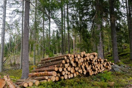 Foto de Woodpile in a green and bright coniferous forest - Imagen libre de derechos