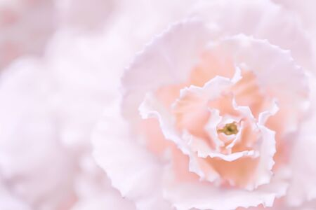 Photo pour Retro art, vintage card and botanical concept - Abstract floral background, pale pink carnation flower. Macro flowers backdrop for holiday brand design - image libre de droit