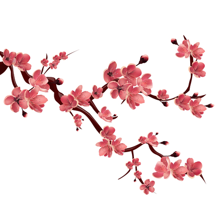 Illustration for Branch of rose blossoming sakura . Japanese cherry tree. Vector Isolated Illustration on white background - Royalty Free Image