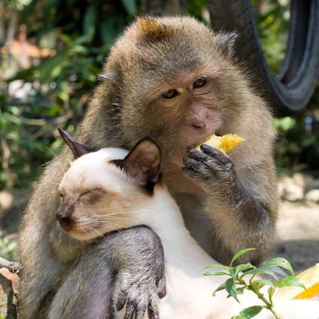 Monkey hugging cat