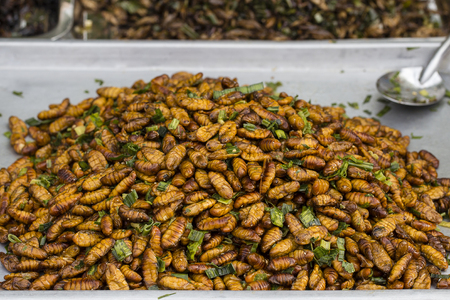 Edible roasted and spiced meal worms, Bugs fried on street food in Thailand, Fried silk worm is the food in Thailand.