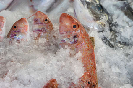 Photo for Raw fish on ice for sell in the street market. Bodrum, Turkey. Close up - Royalty Free Image