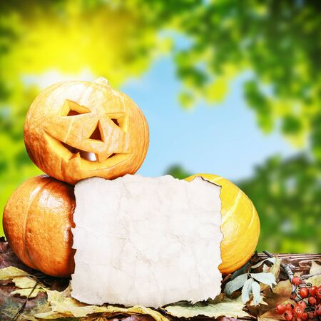 pumpkins for Halloween and sheet of paper on the background of natureの写真素材