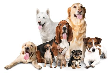 Photo pour Dog, big, small. - image libre de droit