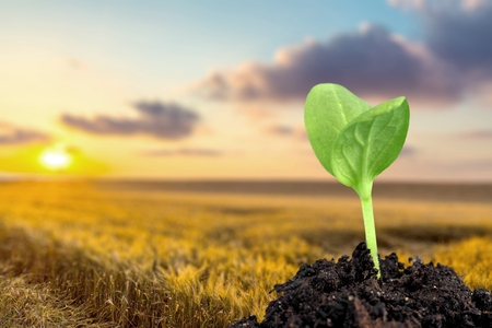 Photo pour Seedling. - image libre de droit