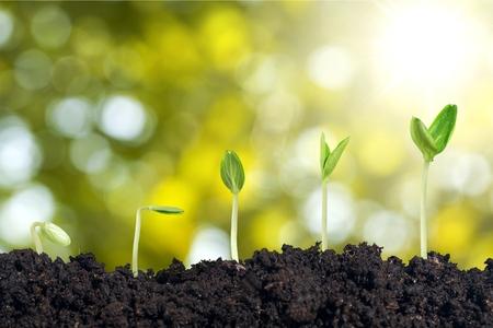 Photo pour Seed growth. - image libre de droit