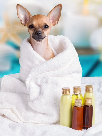 Dog spa treatment.