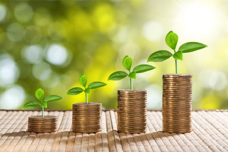 Photo for coins and money growing plant for finance and banking, saving money or interest increasing concept - Royalty Free Image
