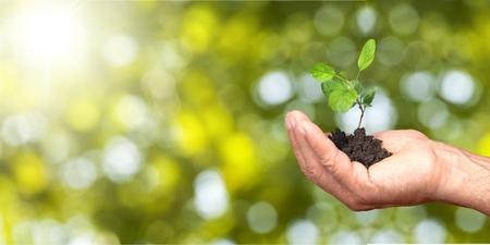 Photo pour Human hands holding plants - image libre de droit