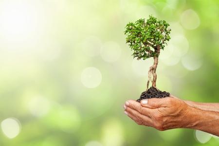 Foto de Green Growing Plant in Human Hands on beautiful natural background - Imagen libre de derechos