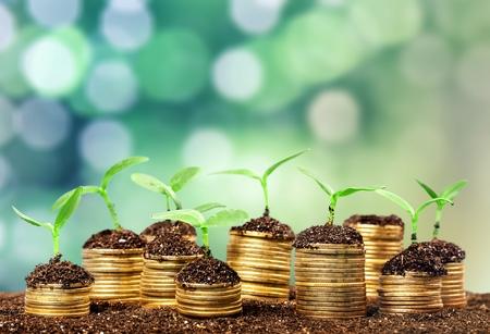 Photo pour Coins in soil with young plants on - image libre de droit