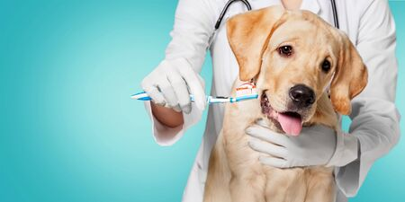 Doctor brushing dog\'s tooth for dental care