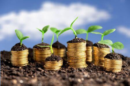 Foto de Coins in soil with young plants - Imagen libre de derechos
