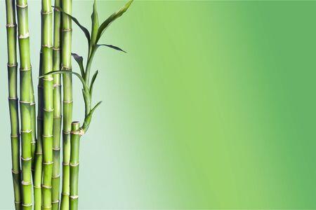 Photo pour Many bamboo stalks on natural background, decoration plant. - image libre de droit