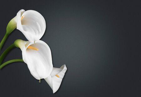 Foto de Lily flower on the dark background. Condolence card. Empty place for a text. - Imagen libre de derechos