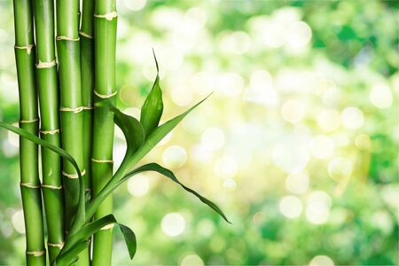 Foto de Many bamboo stalks  on background - Imagen libre de derechos