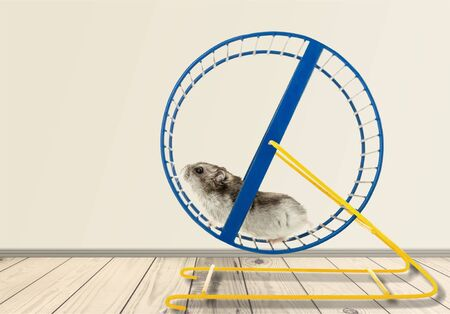 Photo pour Hamster running in circle on wooden table - image libre de droit