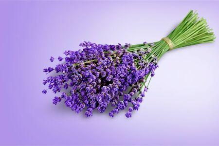 Photo pour Bouquet of lavender flowers on white background - image libre de droit