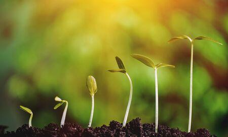 Photo pour Growth of new life concept - image libre de droit