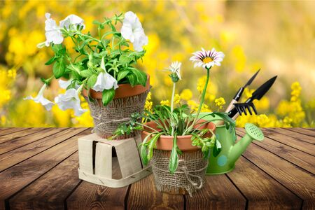 Photo pour Beautiful pink primula in flowerpots and gardening tools, isolated on white - image libre de droit