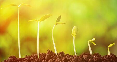 Photo pour Plant-New life concept - image libre de droit