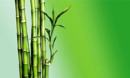 Photo pour Many bamboo stalks  on background - image libre de droit