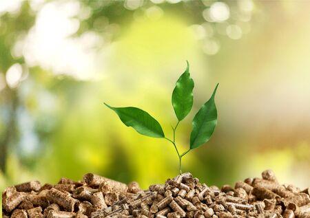 Photo pour Growing plant tree on green background - image libre de droit