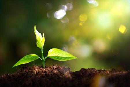 Photo pour Growth of new life on  background - image libre de droit