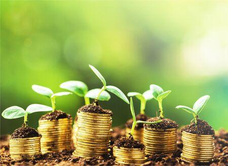 Photo pour Golden coils in soil with young plants - image libre de droit