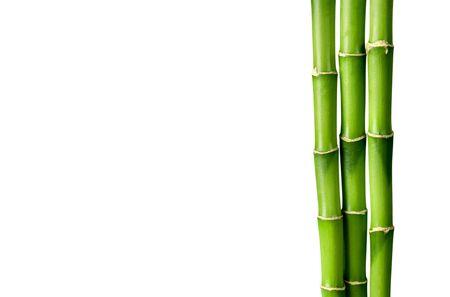 Photo pour Many bamboo stalks on white background - image libre de droit