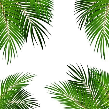 Illustration for Palm Leaf Vector Background Isolated Illustration EPS10 - Royalty Free Image