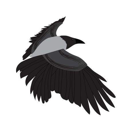 Illustration pour Raven image isolated on white background. Vector Illustration. EPS10 - image libre de droit