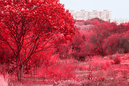 bright red trees and plants look mysterious and fascinate for the forest can be seen high residential buildings
