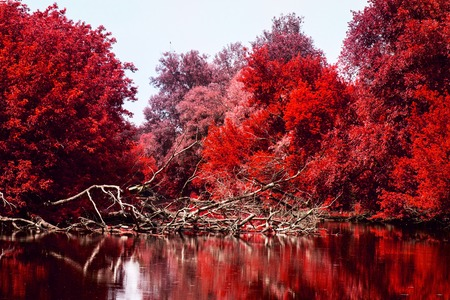 bloody autumn trees with bright red leaves grow near the river cleanly and no one around the exciting atmosphere