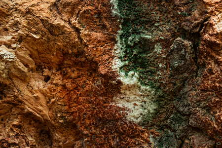 Fantastic Multi Colored Tree Bark Texture Mysterious And