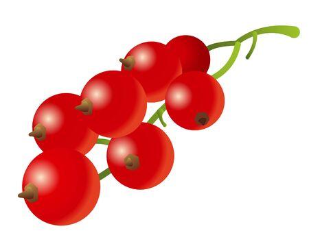 Illustration pour Illustration of the red currant on the white - image libre de droit