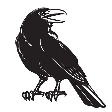 Illustration pour Graphic black crow isolated on white background - image libre de droit