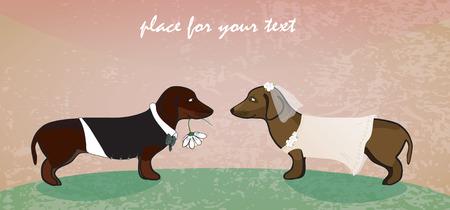 Foto de  Dachshunds as cute groom and bride.  - Imagen libre de derechos