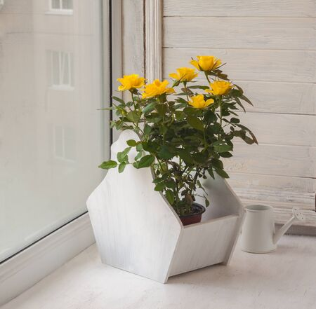Yellow roses on the window box for flowers