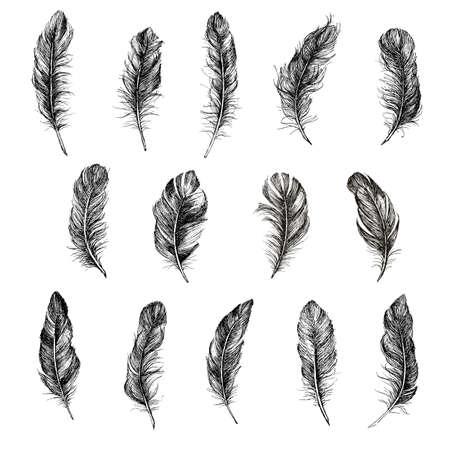 Illustration pour Feather icon set. Hand drawn illustration. Doodle sketch. - image libre de droit