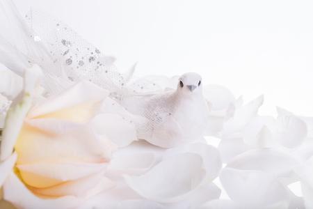 Foto für Romantic wedding background. White dove and white rose, a symbol of peace and love. Wedding, valentine, engagement, anniversary theme - Lizenzfreies Bild
