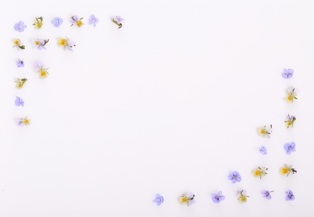 Photo pour Floral pattern on a white background, small white yellow flowers - image libre de droit