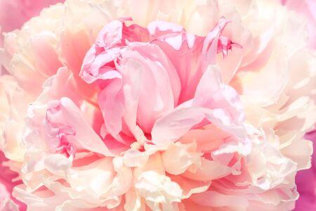 Photo pour Unfocused blur rose petals, abstract romance background, pastel and soft flower card - image libre de droit