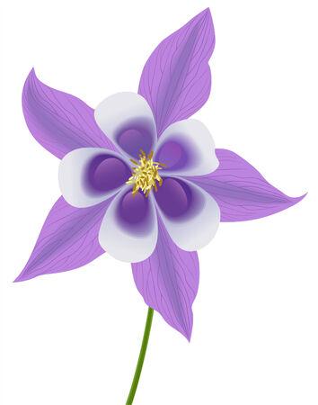 Ilustración de vector illustration of a violet columbine - Imagen libre de derechos