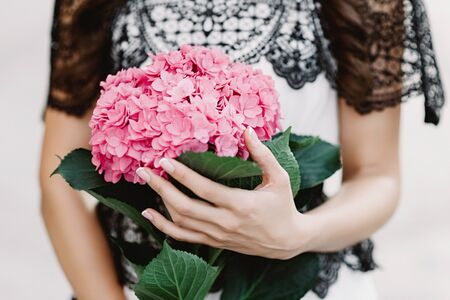 Woman hands accurately embrace a big branch of a fragrant hydrangea of pink color. Beautiful and unusual natural flowers