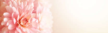 Photo for Defocused pastel, peach, coral dahlia petals close up of flower dahlia, floral abstract banner, soft focus. - Royalty Free Image