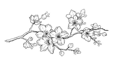 Cherry Flower Blossom Botanical Art Spring Almond