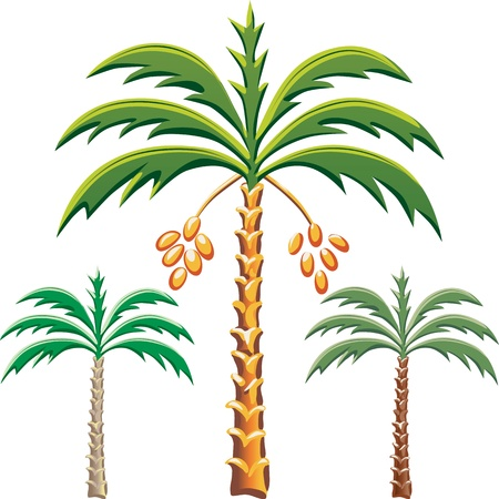 set of the date palm trees, Various color options